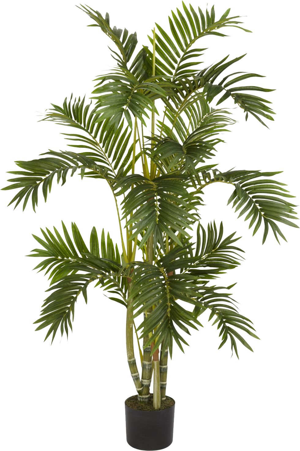 plant png plants png transparent images png only #9500