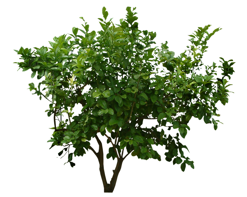 plant png plants png transparent plants images pluspng #9477