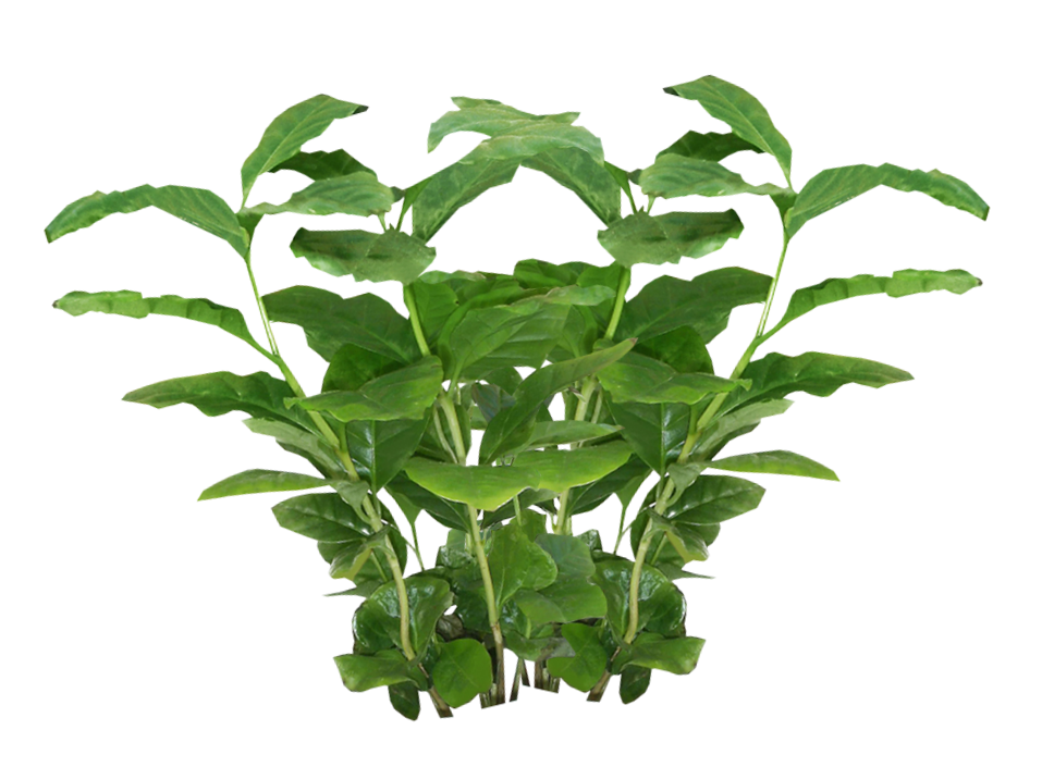 plant png script library #9488
