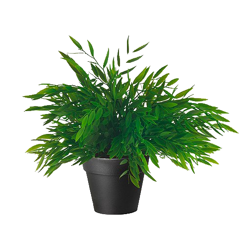 plant png tumblr #9485
