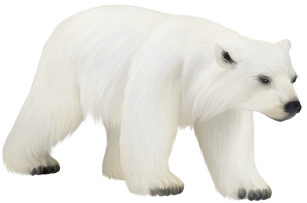 large painted png polar bear clipart gallery yopriceville high quality images and #29820