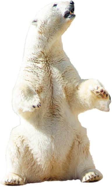 photo polar bear polar bear animal image pixabay #29831