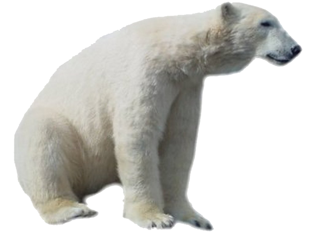 polar bear, bear face png transparent bear face images pluspng #29797