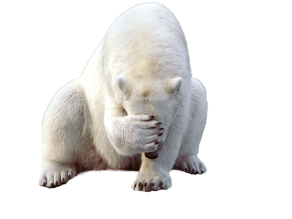 polar bear, download polar white bear png transparent images and clipart pics transparent png #29819