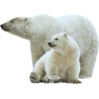 polar bear mother and son transparent png stickpng #29873