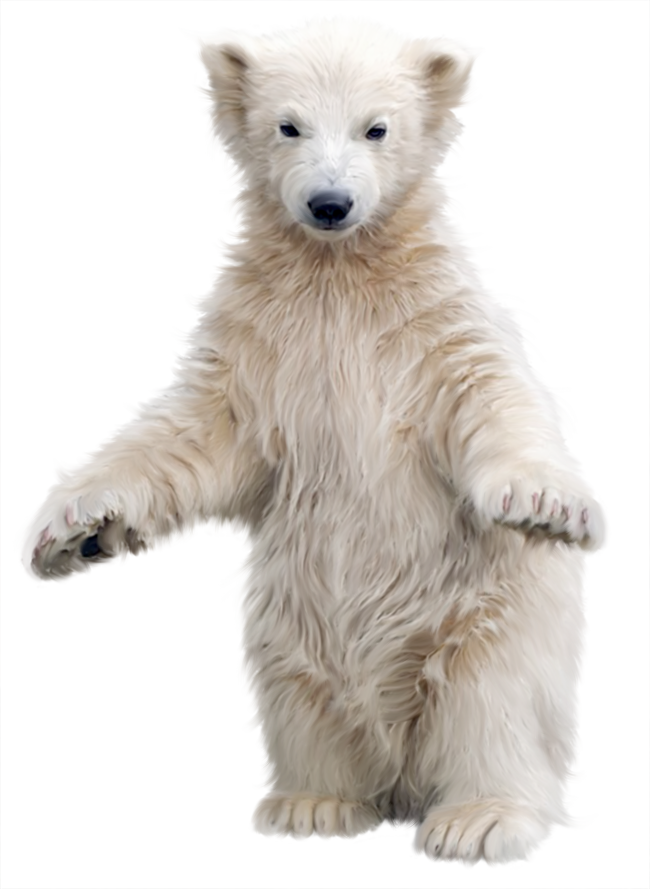 polar bear png image collection download crazypngm crazy png images download #29809