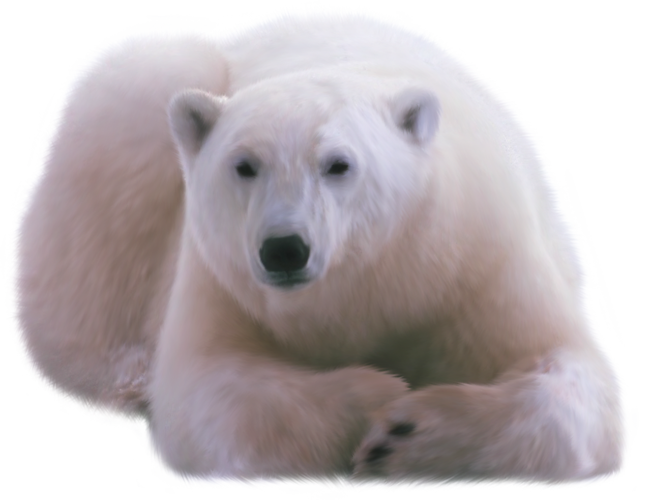 polar bear png image collection download crazypngm crazy png images download #29858