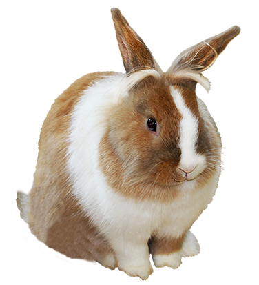 rabbit, funny easter bunny clipart #16913