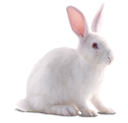 rabbit png transparent images png only #16922