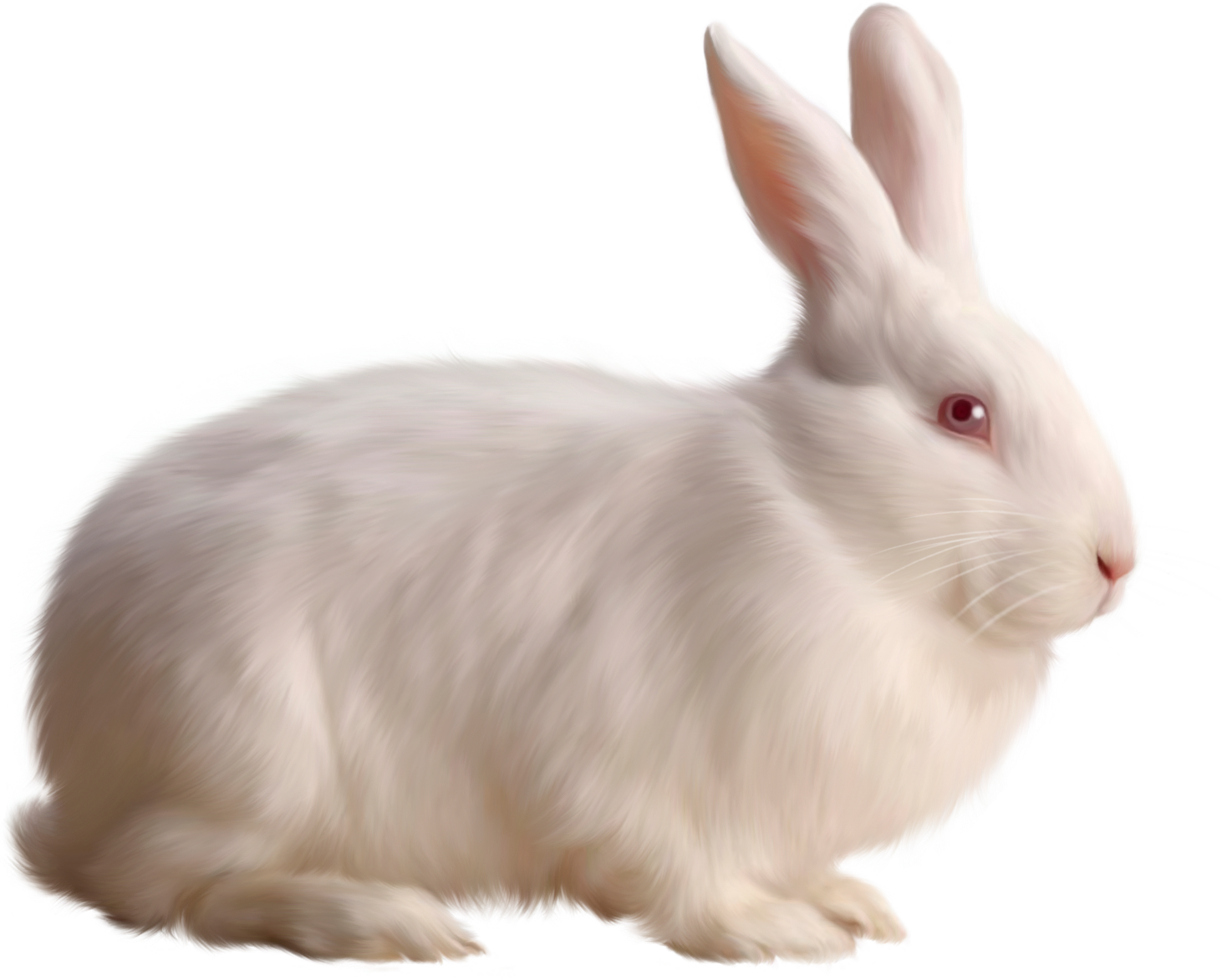 rabbit transparent png pictures icons and png #16962