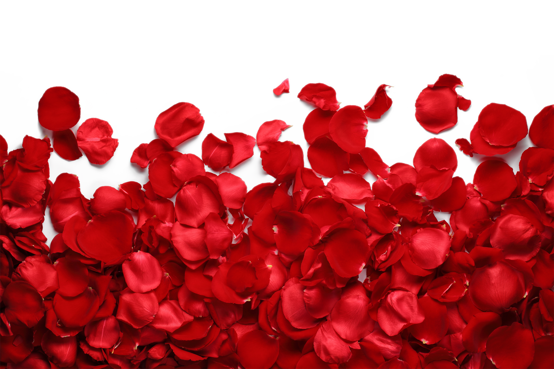 rose petals background png rose petals floor #30966