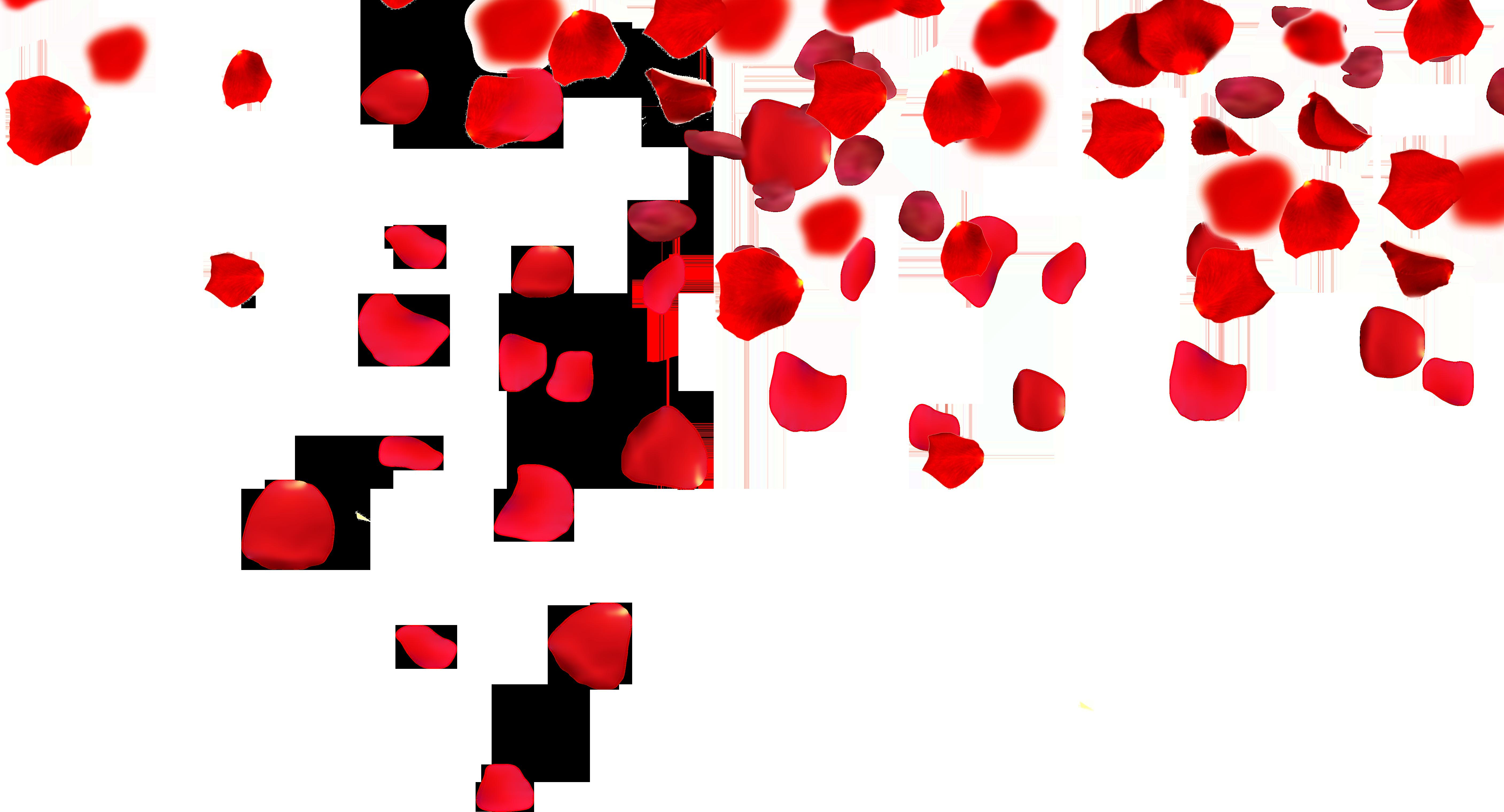 Rose Petals Transparent PNG, Rose Petals Falling, Pink And ...