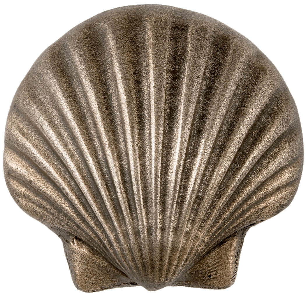 metal scalloped seashell transparent png stickpng #26425