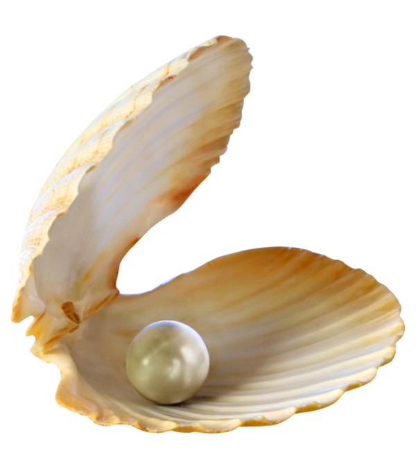 seashell, touching hearts shells the sea tube png #26418