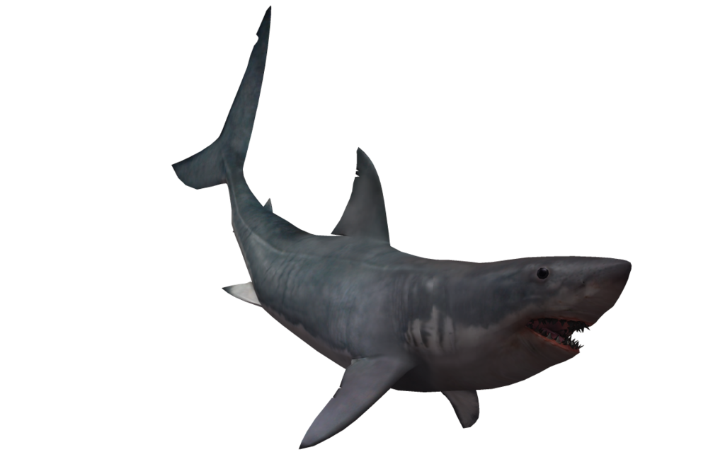 black shark transparent pictures #8513