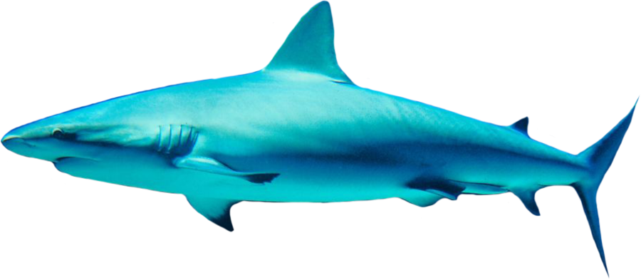 blue shark images in sea download #8518