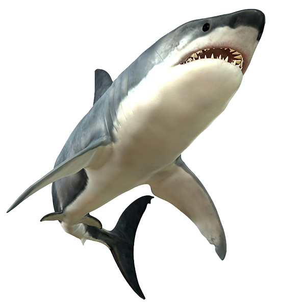 download shark animal picture image #8521