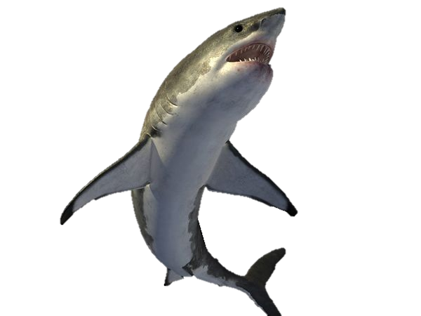 download shark picture image #8505