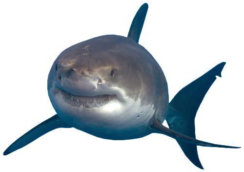 download shark transparent photos #8523