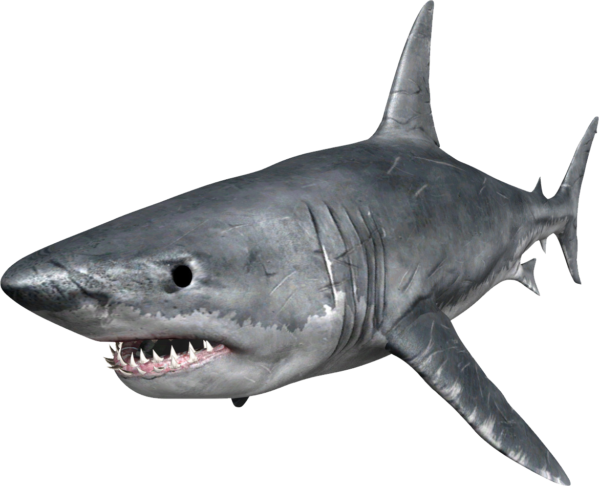 scary shark transparent #8508