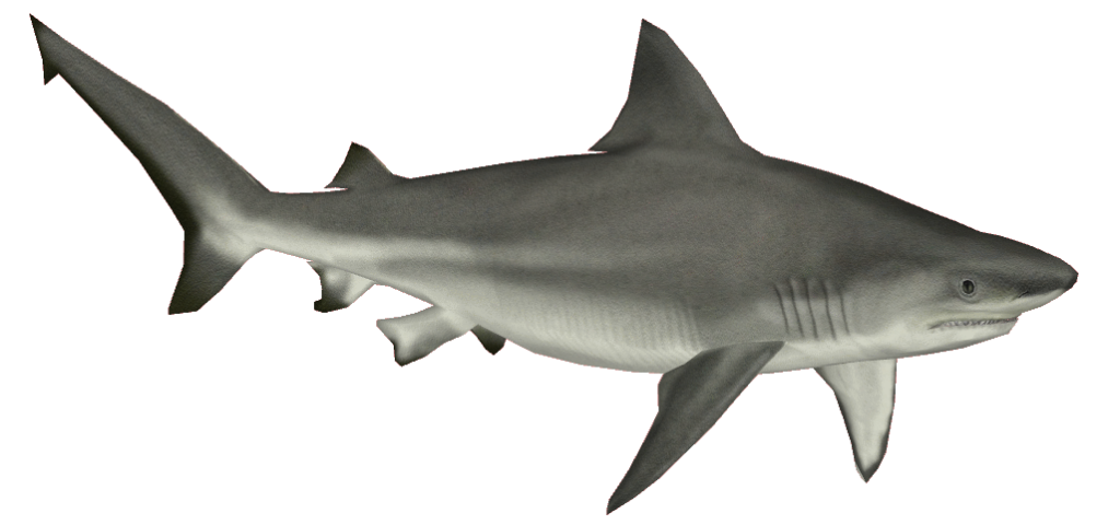 shark transparent pictures icons #8507