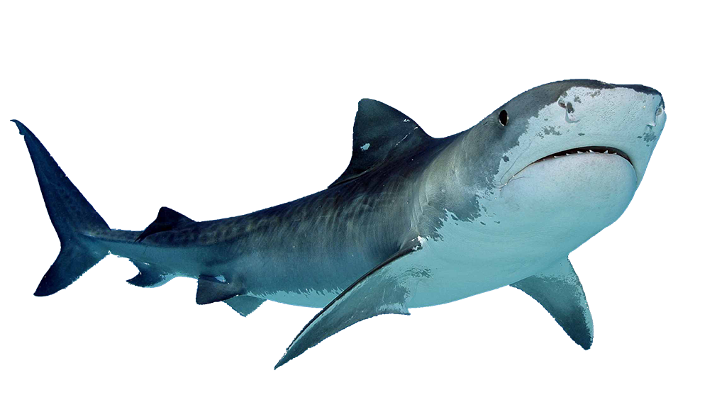 sharks images download shark #8506