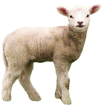 high resolution sheep png clipart icons and #20290