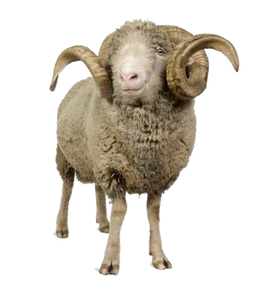 png background sheep transparent icons and #20315