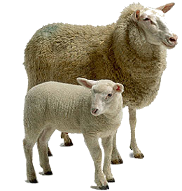 sheep clip art icons and png backgrounds #20293