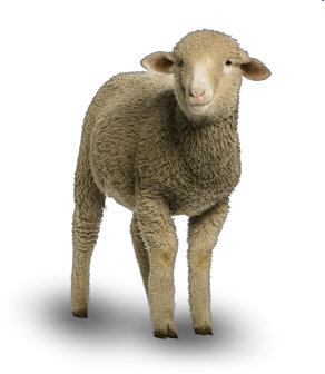sheep png available different size icons #20313