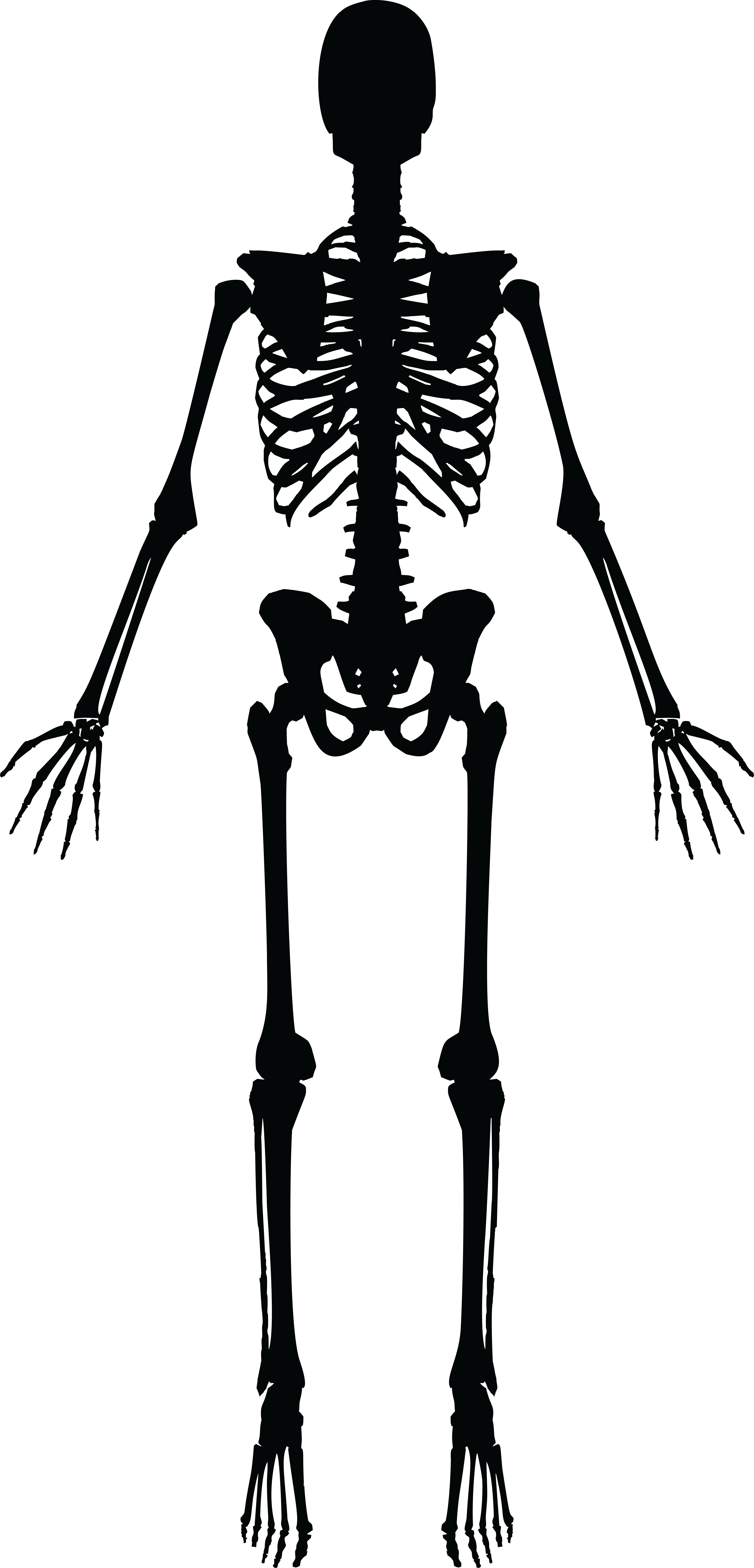 clipart human skeleton black and white #24781