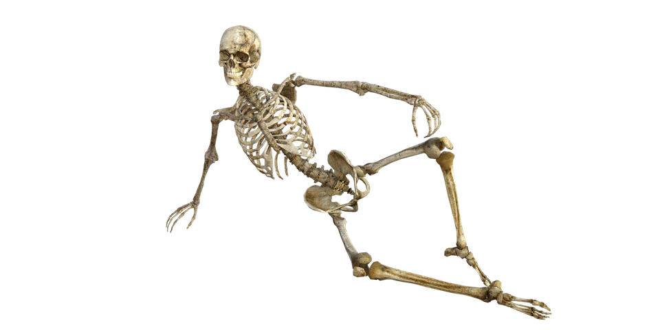 illustration skeleton bones anatomy human #24728