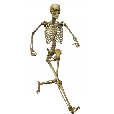running skeleton transparent png stickpng #24764