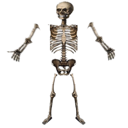 skeleton, index stable web filter apng dynamictexture #24777