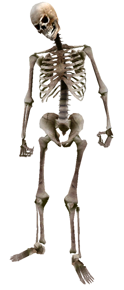 skeleton png transparent skeleton images pluspng #24767