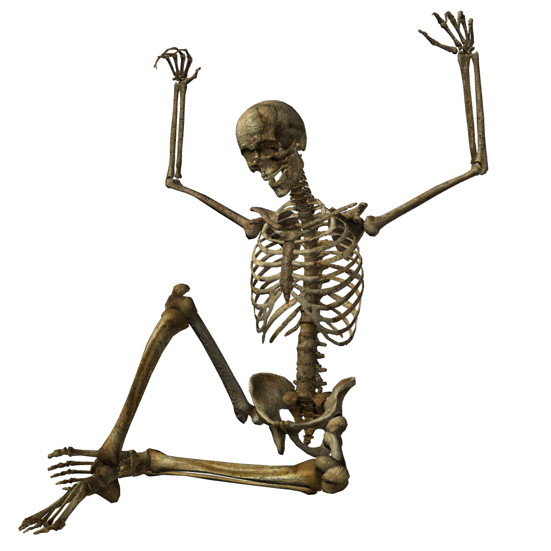 skeleton png transparent skeleton images pluspng #24770