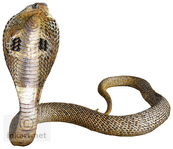 download cobra snake transparent background png image #16439