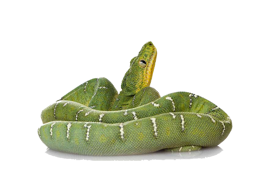 download green snake png file transparent png #16421