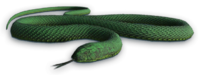 image cutout snake far cry wiki #16436