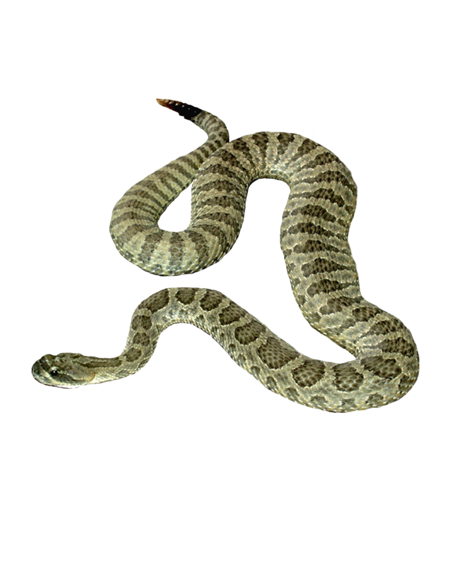 snake png moonglowlilly deviantart #16411