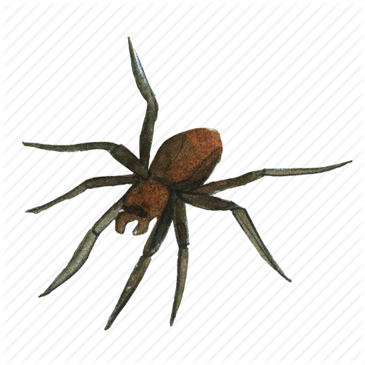 arachnid creepy halloween horror insect scary spider #24533