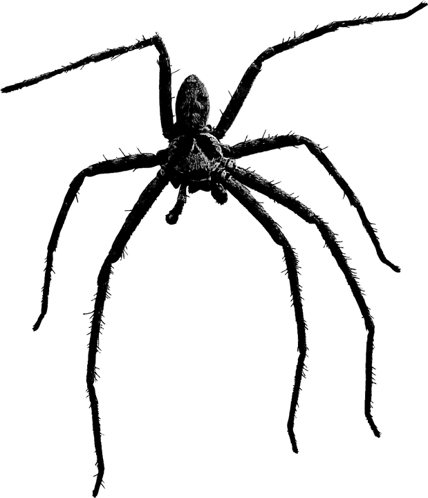spider arachnid insect vector graphic pixabay #24534