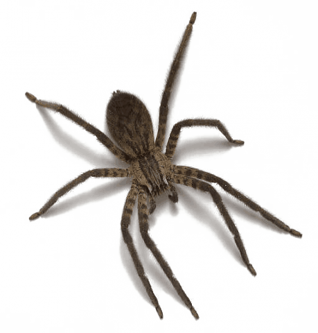 spider, pest home pest control nashville and middle #24564