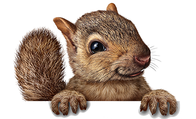 dallas houston best squirrel removal services trapping usa #36934