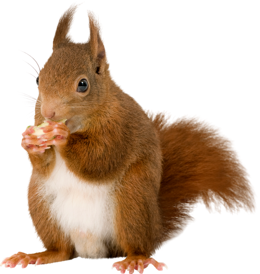 squirrel premium photos canva #36949