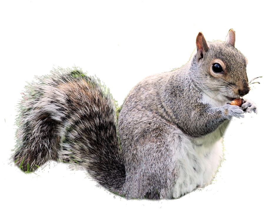week squirrel weekly photoshop competition #36947