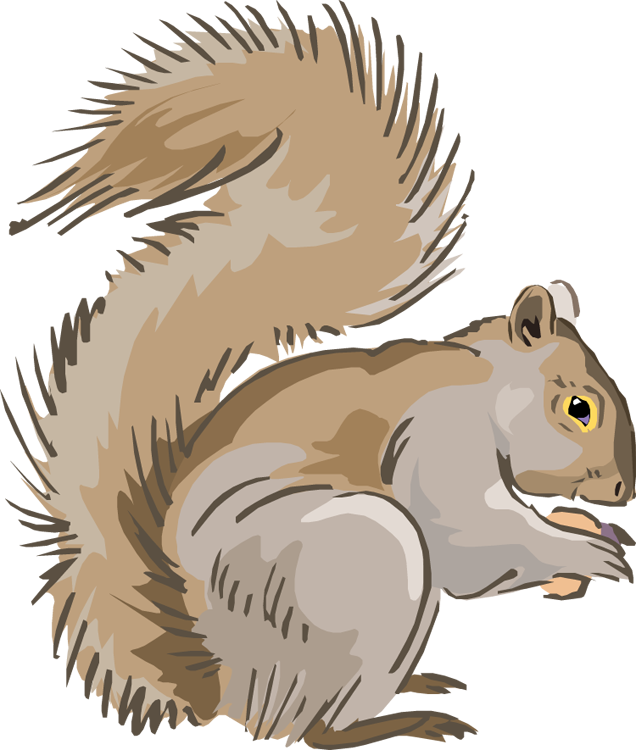 squirrel clipart #37266