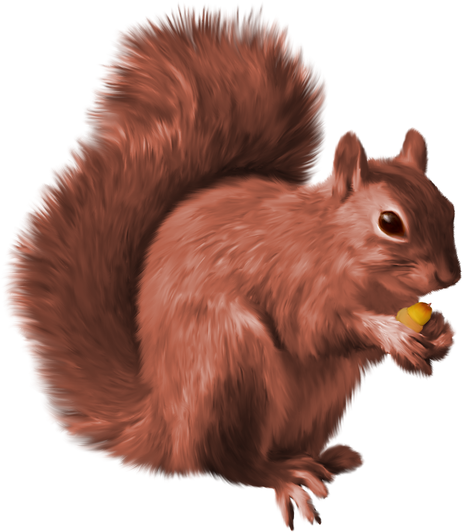 squirrel head png squirrel png nutcrackers #37273