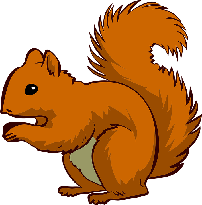 vector graphic squirrel animal pet #37283