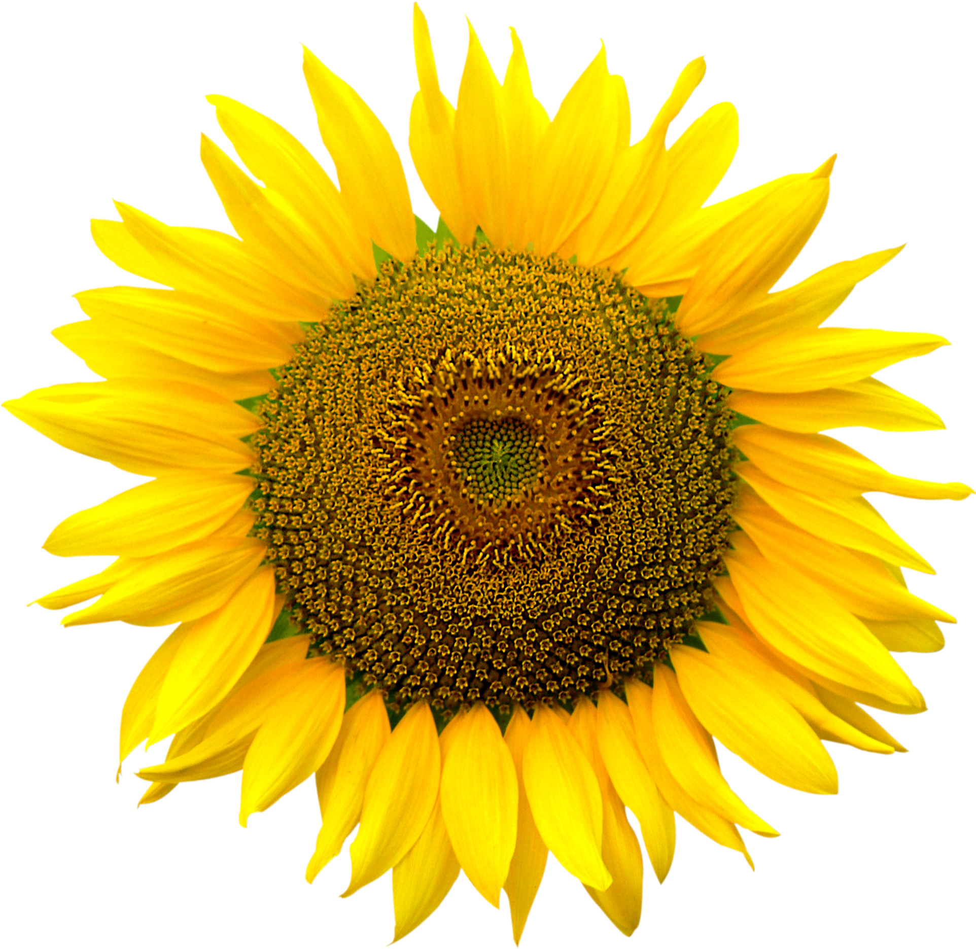 sunflower heart inside png file attention only the #17187